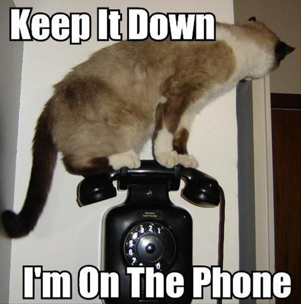 IRTI - funny picture #2350 - tags: cat keep it down on the phone ...