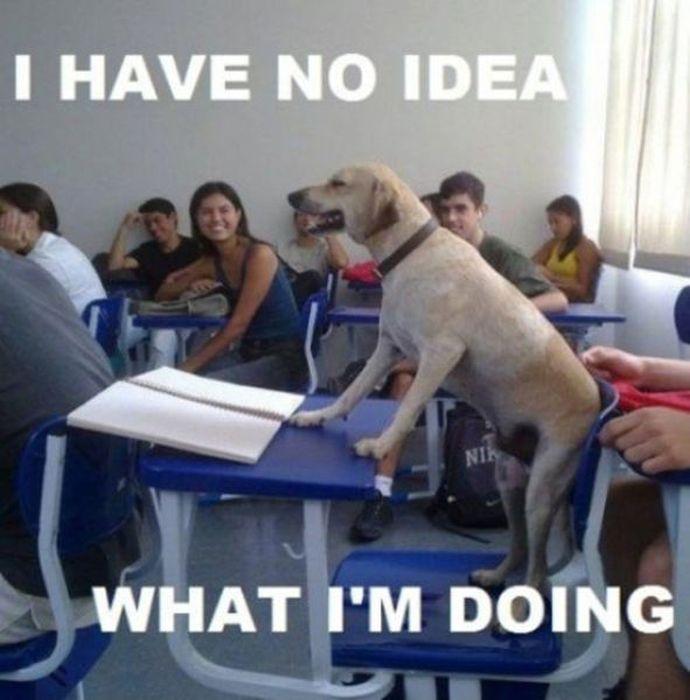 Resultado de imagen de funny classroom