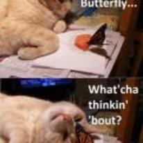 Radnom funny picture tags: Cat butterfly watcha-thinking-about playing kitten
