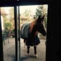 Radnom funny picture tags: I-dont-own-a-horse horse back-garden window interesting