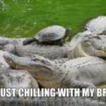 Radnom funny picture tags: alligator snapping-turtle chilling-with-his-bros on-back crocodiles