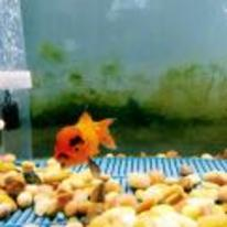 Radnom funny picture tags: angry goldfish tank eyebrows anger