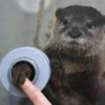 Radnom funny picture tags: aquarium shake hands otters handshake