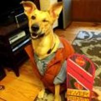 Radnom funny picture tags: back-to-the-future dog costume halloween marty-mcfly