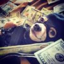 Radnom funny picture tags: balaclava-dog terrorist money gun dog