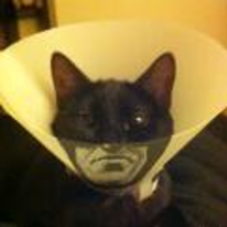 Radnom funny picture tags: batman cat cone face the-hero