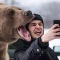 Radnom funny picture tags: bear selfie scary brave slightly-dangerous