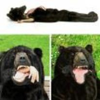 Radnom funny picture tags: black bear sleeping-bag want need