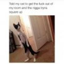 Radnom funny picture tags: black-twitter cat square-up get-out-my-room standing-up