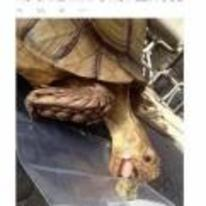 Radnom funny picture tags: black-twitter tortoise weed no-carl not-lettuce