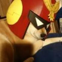 Radnom funny picture tags: captain-falcon dog helmet smash-brothers captain-falcon-dog