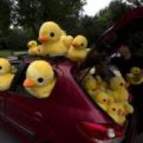Radnom funny picture tags: car stuffed full rubber ducks