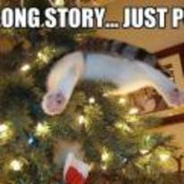 Radnom funny picture tags: cat Christmas-tree stuck upside-down long-story-just-pull