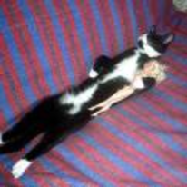 Radnom funny picture tags: cat asleep holding-doll lying-on-back sofa