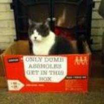 Radnom funny picture tags: cat box dumb assholes only-get-in-this-box
