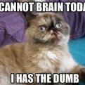 Radnom funny picture tags: cat cannot brain today dumb