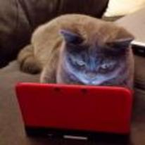 Radnom funny picture tags: cat cat-playing-3ds nintendo playing-ds cat-playing-nintendo