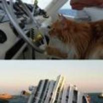 Radnom funny picture tags: cat driving boat crashes side