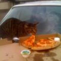 Radnom funny picture tags: cat eating-pizza pizza car outside
