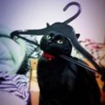 Radnom funny picture tags: cat head stuck coat-hanger dont-leave-me-hanging