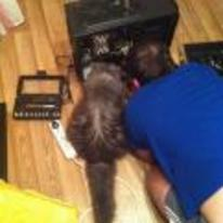Radnom funny picture tags: cat helping fix computer PC