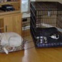 Radnom funny picture tags: cat in dogs bed cage