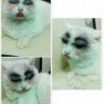 Radnom funny picture tags: cat make-up lipstick blusher pretty