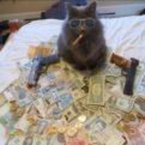 Radnom funny picture tags: cat money guns smoking sunglasses