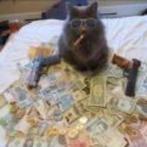 Radnom funny picture tags: cat money guns smoking sunglasses