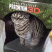 Radnom funny picture tags: cat predator DVD box 3D