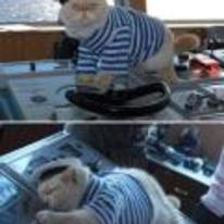 Radnom funny picture tags: cat sailing boat falls-asleep controls