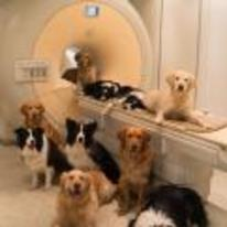 Radnom funny picture tags: cat-scan brings-in-the-dogs dogs hospital dog