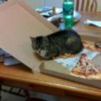 Radnom funny picture tags: cat sitting-on-pizza pizza-ruined catte doesnt-care