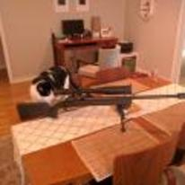 Radnom funny picture tags: cat sniper sniper-rifel gun snipe