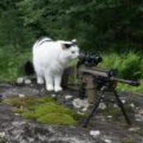 Radnom funny picture tags: cat sniper sniper-rifle snipe scope