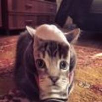 Radnom funny picture tags: cat-socks cat actual-cat eyes face