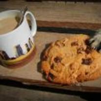 Radnom funny picture tags: cat stealing cookie paw table