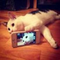Radnom funny picture tags: cat taking selfie iphone camera