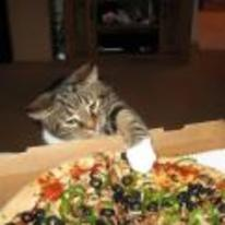 Radnom funny picture tags: cat wants pizza paw need