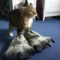 Radnom funny picture tags: cat wearing monster feet slippers