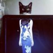 Radnom funny picture tags: confused cat dress laptop illusion