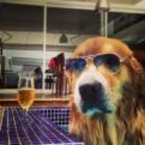 Radnom funny picture tags: cool dog sunglasses drinking-bear instagram