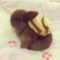 Currently trending funny picture tags: cute baby rabbit bunny backpack