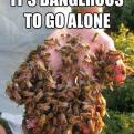 Radnom funny picture tags: dangeroustogoalone take this bees hand
