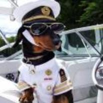 Currently trending funny picture tags: dog boat captain shades cool