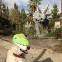 Radnom funny picture tags: dog-dinosaur mask dino jurassic-bark dog-wearing-dinosaur-mask
