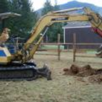 Radnom funny picture tags: dog dog-digging-up-yard back-garden tractor-arm digger