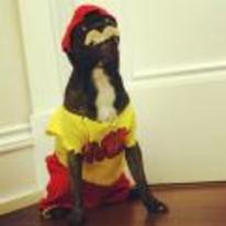 Radnom funny picture tags: dog hulk costume tash cosplay