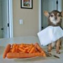 Radnom funny picture tags: dog napkin plate carrots dinner