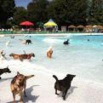 Radnom funny picture tags: dog pool party pack water
